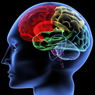 2D Design of a Human Brain in a head
